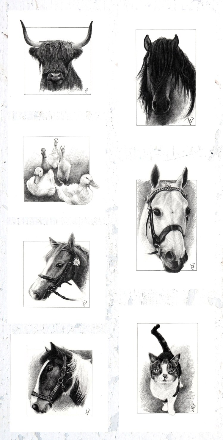 North Highlands Art Sketch A Day challenge. 31 days of pencil sketches. Equestrian Art