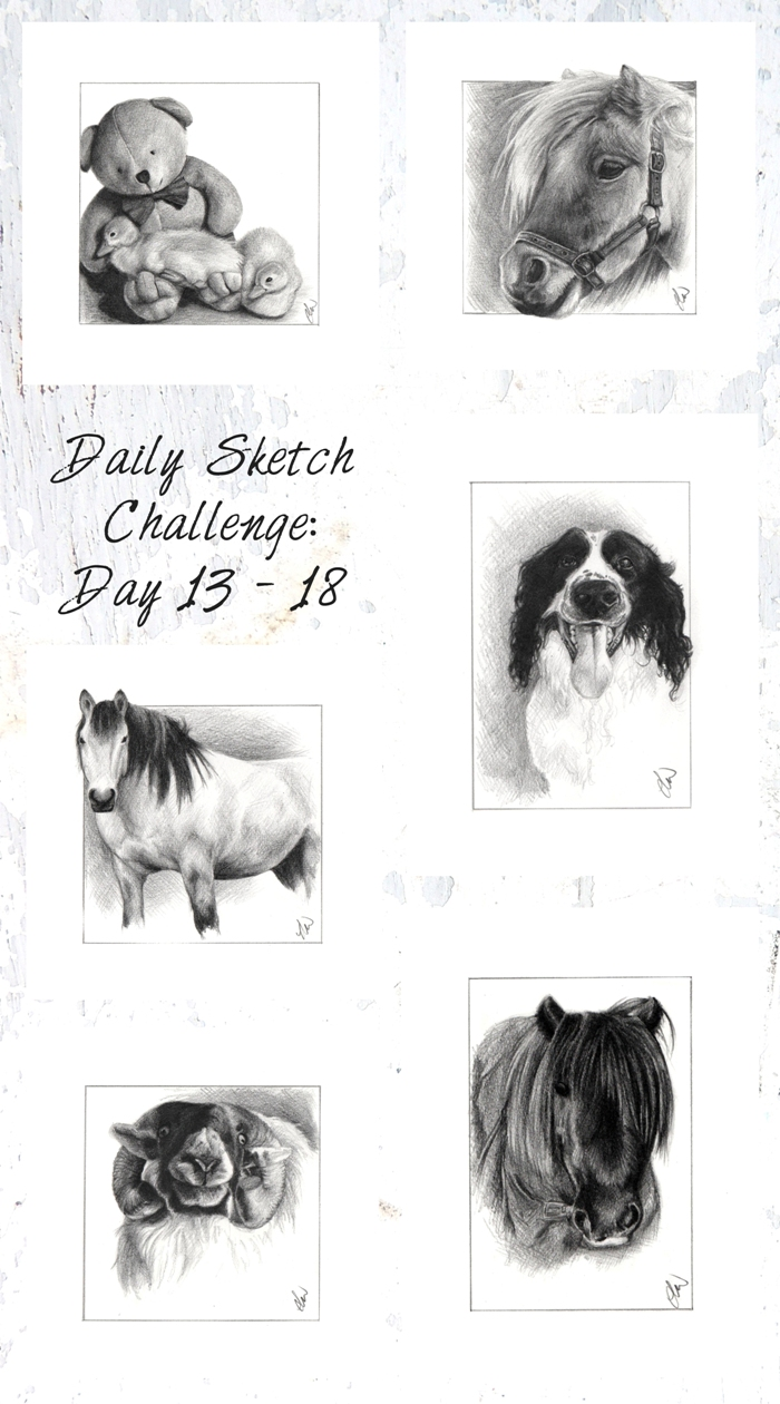 Animal pencil sketches. Canine and Equestrian Art. Pencil drawings of dogs, horses and sheep.