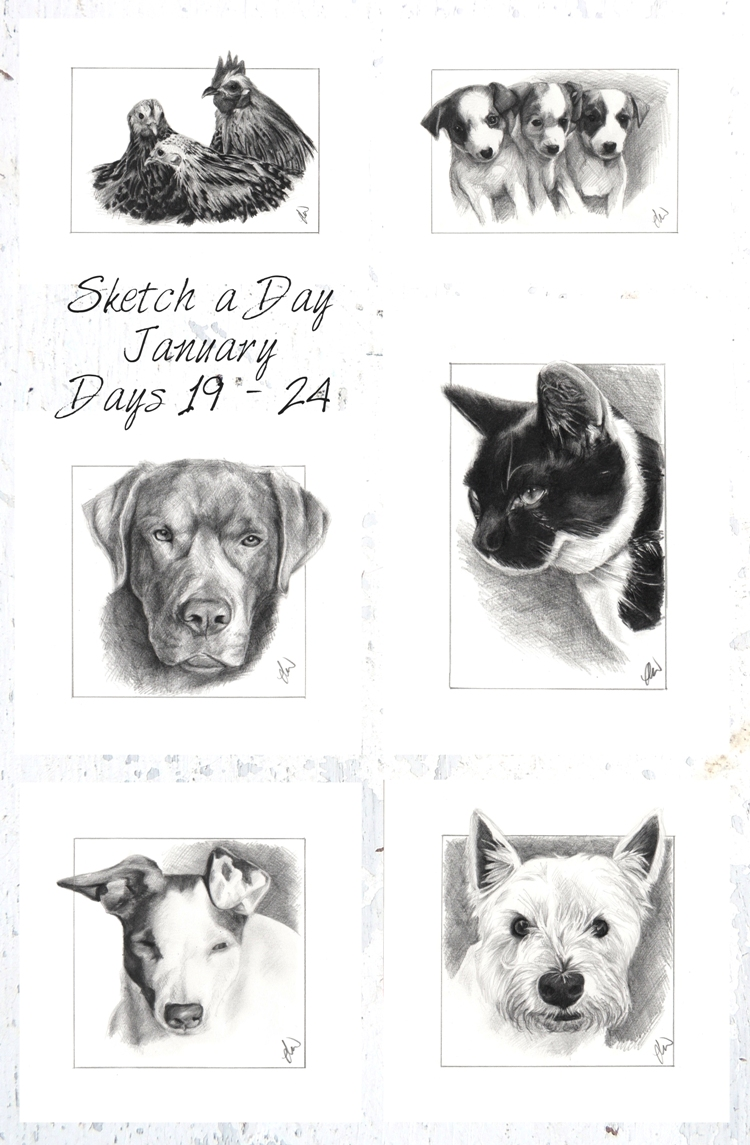 Pencil sketches. graphite pencil drawings of dogs, cats and chickens by Laura Williams At North Highlands Art